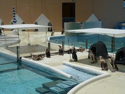 ペンギンちゃんのお出迎え