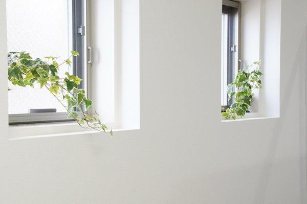 出窓にグリーン