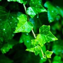 【6月の占い】雨の日…