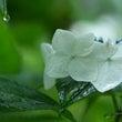 梅雨と付き合う