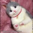グレー&白猫さんバッ…