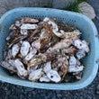 牡蠣殻の簡単な再利用…