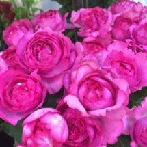 Rose×Rose