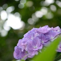 公園散歩と紫陽花ネイ…