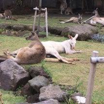 動物園(^^)