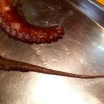 蛸サンはデリケート
