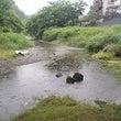 北浅川 放流日