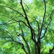 新緑の八瀬