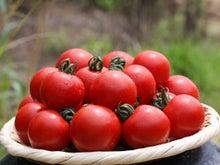 宝石のようなトマト
