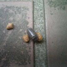 ダンゴ虫と平和なひと…