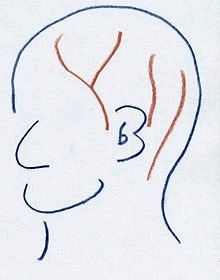 頭皮の血管