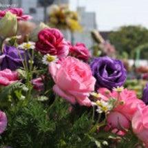 花と緑のフェスティバ…