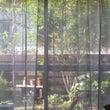 朝起きて庭を眺めるの…