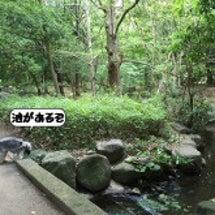 花菖蒲~香澄公園