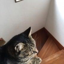 猫ブーム到来⁉︎