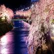 桜咲く②☆
