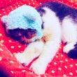 猫のための防災セミナ…