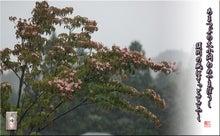 フォト短歌「雨のヤマボウシ」
