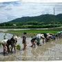 田植祭&「晴れの国発…