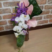 胡蝶蘭とアランダのア…