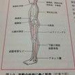 骨格を支えてる『抗重…