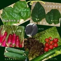 自家製野菜でサラダう…