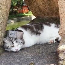 住吉大社のご縁〜狛猫…