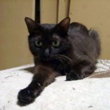 黒猫の魅力 ノキちゃ…