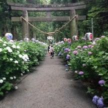 磯山神社のアジサイ