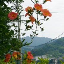春夫の愛した花
