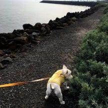 ビーチで散歩