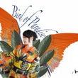夏の新作【Bird …