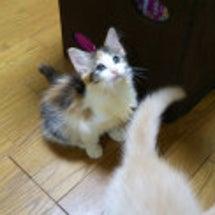 仔猫は日本中に巣立ち…