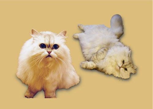 猫の写真でつくるエコバッグ