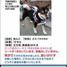 平塚の迷子犬無事保護