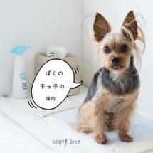 【追記】犬と暮らすイ…