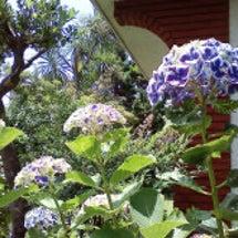 父の庭~初夏~
