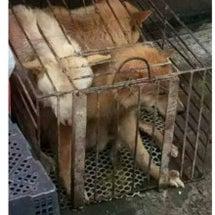 【中国】玉林犬肉祭り…