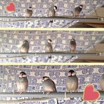 水浴び後の 文鳥's…