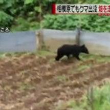近隣での野生の熊出没…