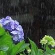 梅雨どきの腰痛