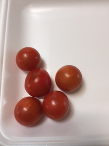20160621_ミニトマト初収穫