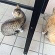 我が家の「猫」のはな…