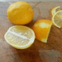 稲田堤産のレモン