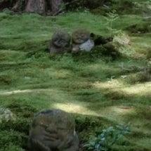 苔と一体化