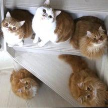 階段に猫集合!