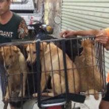 玉林犬肉祭り関連記事…