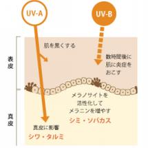 紫外線とUVケア