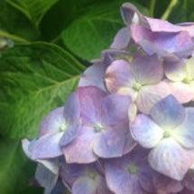紫陽花アレンジ2♡