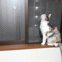 うちの猫が脱走してし…
